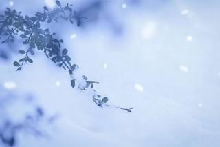 冬.jpg
